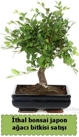 İthal bonsai saksı çiçeği Japon ağacı satışı  Niğde kaliteli taze ve ucuz çiçekler