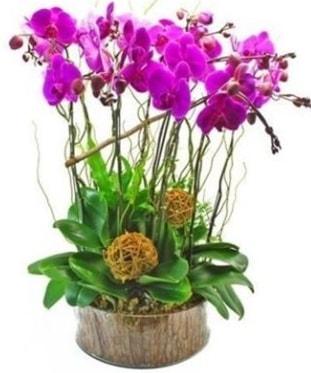 Ahşap kütükte lila mor orkide 8 li  Niğde çiçek , çiçekçi , çiçekçilik