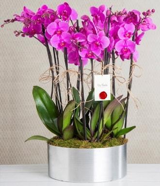 11 dallı mor orkide metal vazoda  Niğde güvenli kaliteli hızlı çiçek