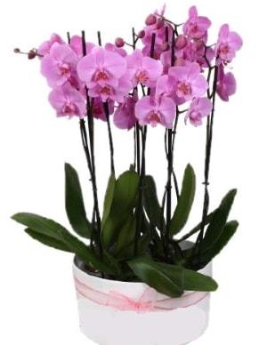 Beyaz seramik içerisinde 7 dallı mor orkide  Niğde çiçek yolla , çiçek gönder , çiçekçi