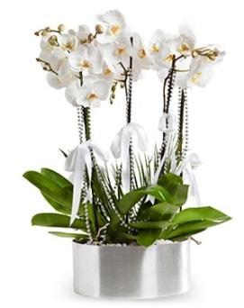 Beş dallı metal saksıda beyaz orkide  Niğde yurtiçi ve yurtdışı çiçek siparişi