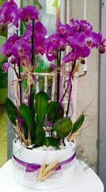 Seramik vazoda 4 dallı mor lila orkide  Niğde çiçek siparişi sitesi