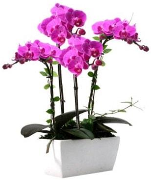 Seramik vazo içerisinde 4 dallı mor orkide  Niğde İnternetten çiçek siparişi