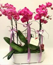 Beyaz seramik içerisinde 4 dallı orkide  Niğde çiçek yolla