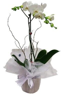 Tek dallı beyaz orkide  Niğde internetten çiçek satışı