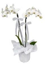 2 dallı beyaz orkide  Niğde hediye sevgilime hediye çiçek