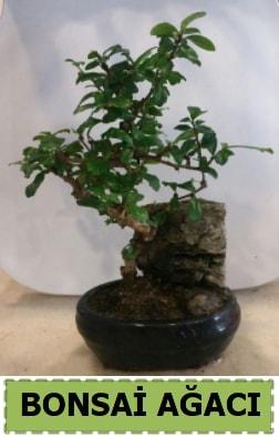 Bonsai ağacı japon ağacı satışı  Niğde çiçek gönderme