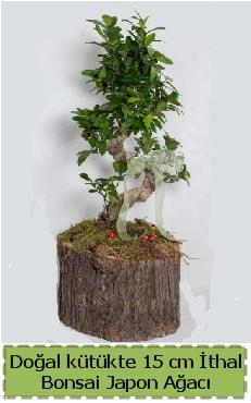 Doğal kütükte İthal bonsai japon ağacı  Niğde online çiçekçi , çiçek siparişi