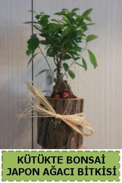 Kütük içerisinde doğal bonsai ağacı  Niğde çiçek yolla , çiçek gönder , çiçekçi
