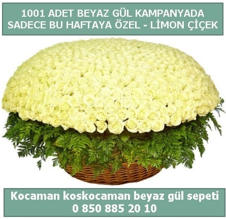 1001 adet beyaz gül sepeti özel kampanyada  Niğde güvenli kaliteli hızlı çiçek