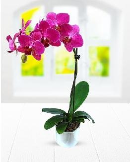 Tek dallı mor orkide  Niğde İnternetten çiçek siparişi