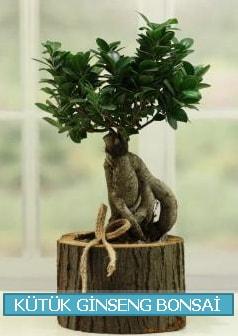 Kütük ağaç içerisinde ginseng bonsai  Niğde güvenli kaliteli hızlı çiçek
