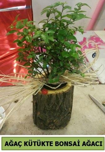 Doğal ağaç kütük içerisinde bonsai ağacı  Niğde güvenli kaliteli hızlı çiçek