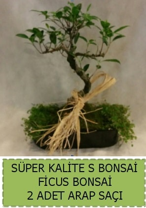 Ficus S Bonsai ve arap saçı  Niğde çiçek yolla , çiçek gönder , çiçekçi