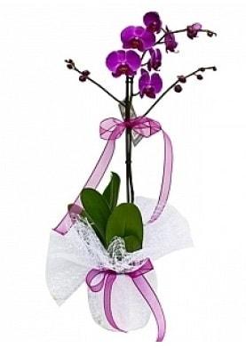 Tekli Mor Orkide  Niğde yurtiçi ve yurtdışı çiçek siparişi