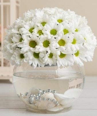 Fanusta beyaz Papatya  Niğde İnternetten çiçek siparişi