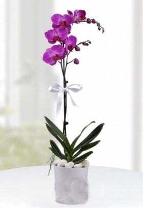 Tek dallı saksıda mor orkide çiçeği  Niğde ucuz çiçek gönder