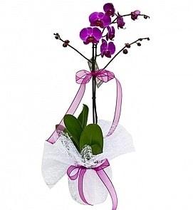 Tek dallı saksıda ithal mor orkide çiçeği  Niğde ucuz çiçek gönder