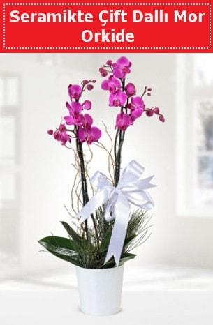 Seramikte Çift Dallı Mor Orkide  Niğde online çiçek gönderme sipariş